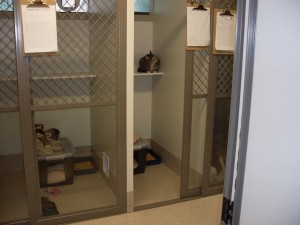 cattery1